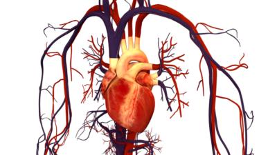 Tener la menstruación antes de los 12 años aumenta un 10% el riesgo de enfermedad cardíaca