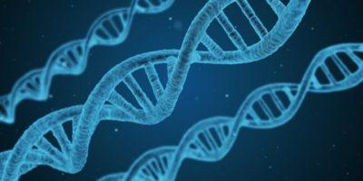 Identificado un gen clave para la recuperación del ictus